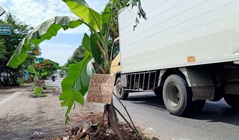Kesal Memuncak, Warga Tuban Tanam Pohon Pisang di Jalan Berlubang