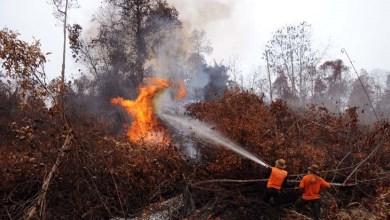 Photo of Janji Manis Omong Kosong, Atasi Kebakaran Hutan dan Lahan