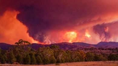 Photo of Darurat, Kebakaran Hutan di Ambang Pintu Canberra