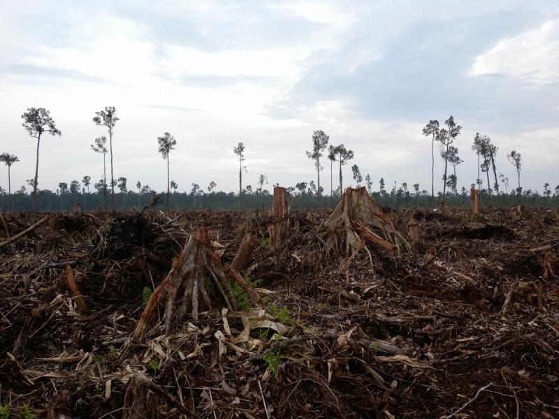 "Hutan Harimau Sumatra yang berada dalam area yang dideklarasikan sendiri oleh APP sebagai ""Suaka Harimau Senepis"" di konsesi PT Suntara Gajapati, pemasok kayu SMG/APP di Provinsi Riau. (Foto: WWF Indonesia)"