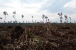 Satu tahun Kebijakan Konservasi Hutan APP: Peringatan tanpa kemenangan bagi konservasi