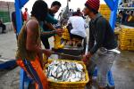 Ada 16.855 Ribu Nelayan Terancam Kehilangan Mata Pencaharian Jika Teluk Jakarta Direklamasi