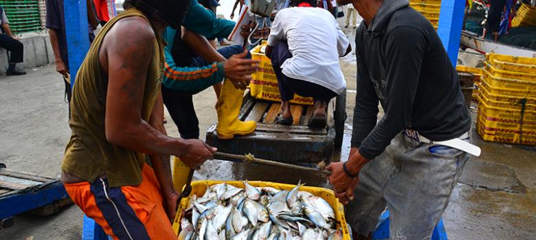 Nelayan menimbang ikan di Muara Angke, Jakarta (11/5). (Foto: Fajrul Islam)