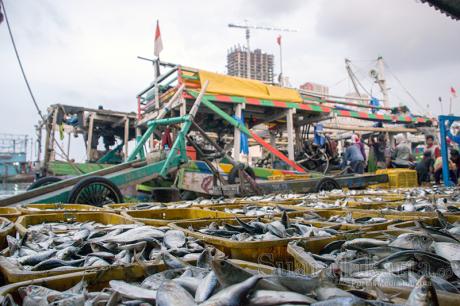 Keranjang penuh ikan di Muara Angke, Jakarta (11/5). (Foto: Fajrul Islam)
