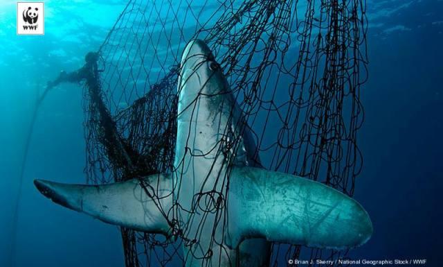 suara jakarta WWFAlat Tangkap Trawl Ancam Keberlanjutan Sumberdaya Laut