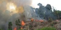 Gunung Merbabu Terbakar Mencapai 25 Hektar