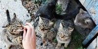 Mencari Bahagia dengan Memberi Makan Puluhan Kucing