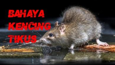 Photo of Kencing tikus: seorang maut, empat masih dirawat di HSNZ
