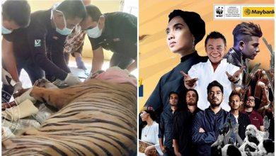 Photo of Konsert selamatkan Harimau Malaya