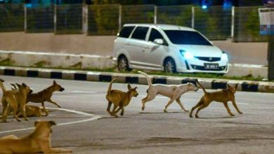 Photo of Kumpulan anjing liar berkeliaran undang keresahan penduduk