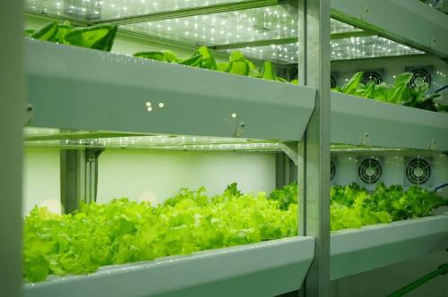 Manfaat Teknologi Tepat Guna Sederhana Pertanian