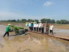 Foto Dinas Ketahanan Pangan Pertanian dan Perikanan (DKP3) Kota Metro Tanam Panen Usia 70 Hari