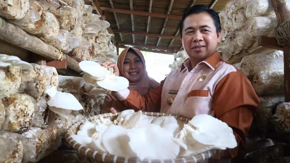 Banjarmasin Punya Kampung Jamur