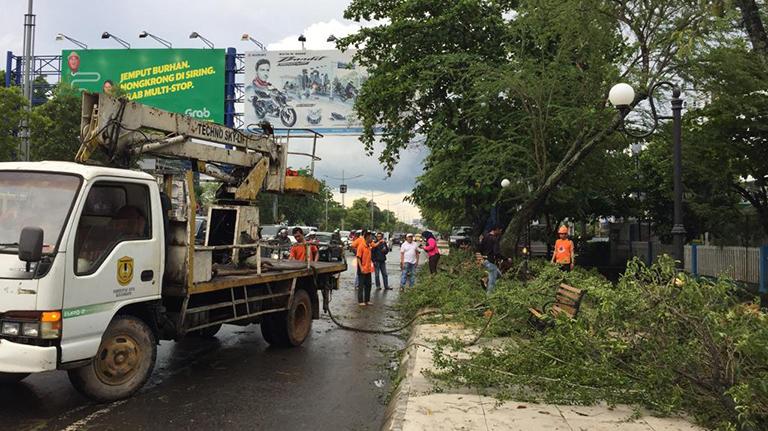 Pohon Tumbang di Tengah Jalan A Yani, Lalin Macet Dua Jam
