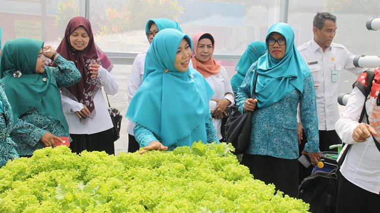 Hj Siti Wasilah Puji Pengembangan Tanaman Hidroponik