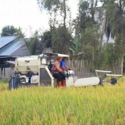 PENGEMBANGAN Pertanian di Tanah Laut Didukung Bank Kalsel