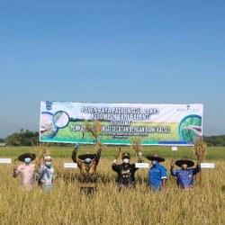PETANI Bersama Bank Kalsel, Panen Raya di Hulu Sungai Selatan