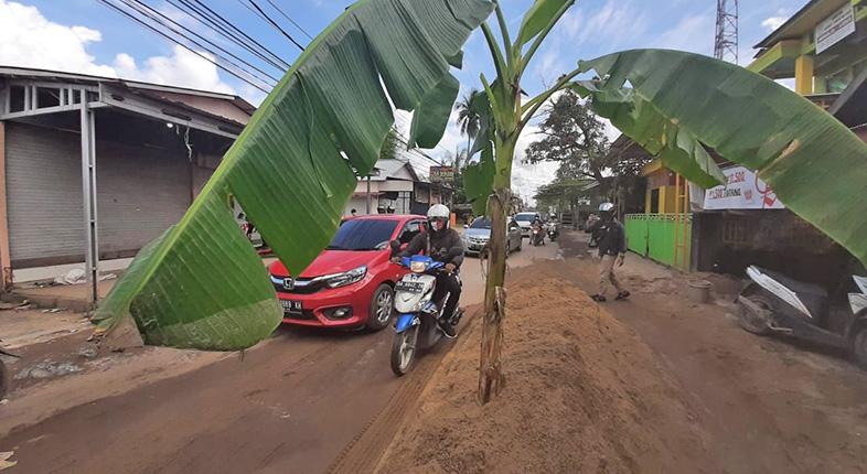 GANGGU Aktivitas Warga, Pohon Pisang di Tengah Jalan