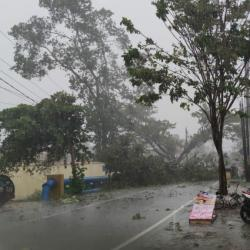 DALAM SEHARI Sembilan Pohon Tumbang