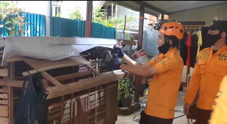 Ular PITON Pemangsa 6 Ayam Bambang Akhirnya Ditangkap