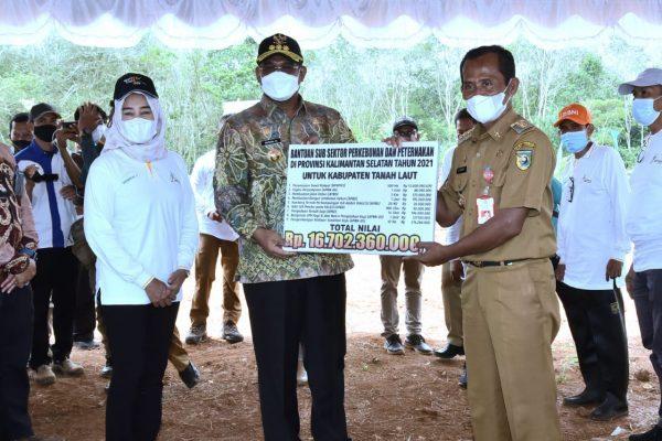 DITARGET 3.500 Hektare Peremajaan Sawit Rakyat Kalsel