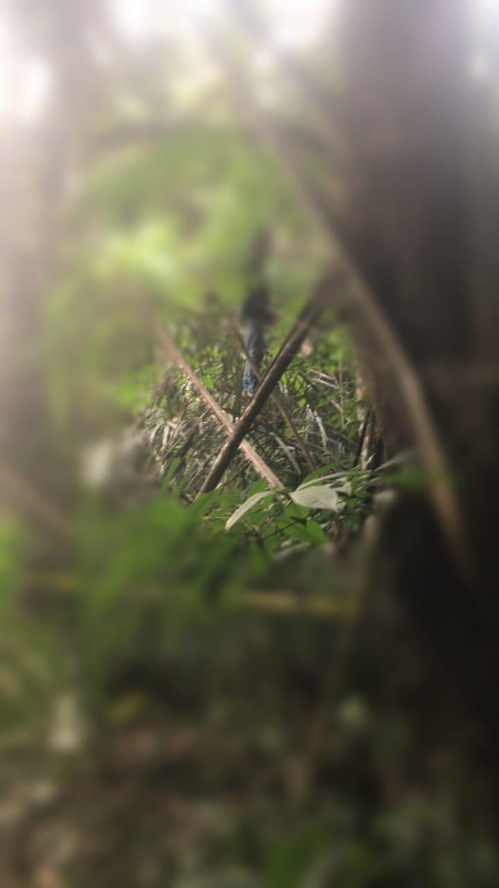 GANTUNG DIRI di Pohon dengan Tali Jemuran, Begini Awalnya Korban Nekad