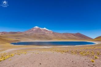 Laguna Miscanti - Altiplânicas no Deserto do Atacama Fotos