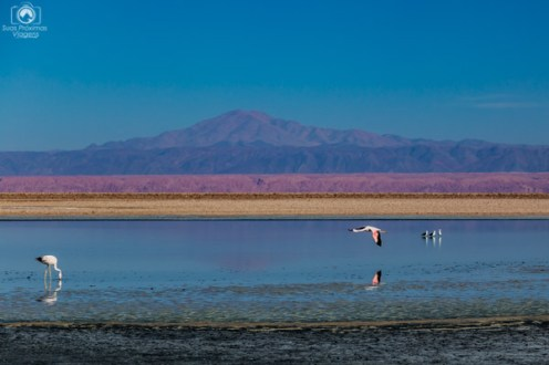 Vista dos Flamingos na Laguna Chaxa no Roteiro no Atacama