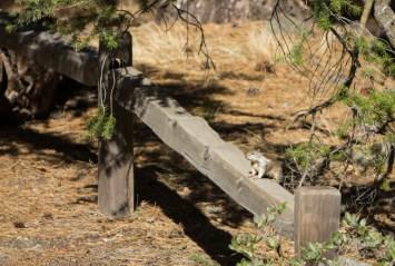 Um esquilo sobre um tronco no Parque Nacional Yosemite