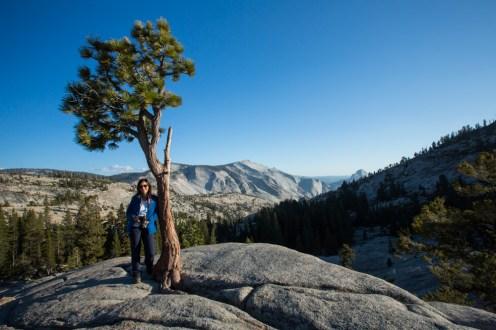 Arvore Germinada no Sentinel Dome no Parque Nacional Yosemite