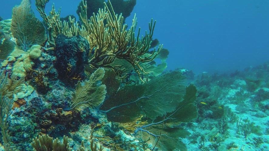 Mergulhos no Havaí