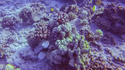 Mergulhos Molokini 1