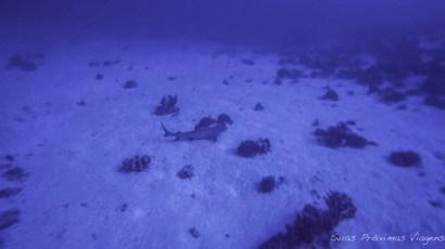 Mergulhos Molokini White Tip