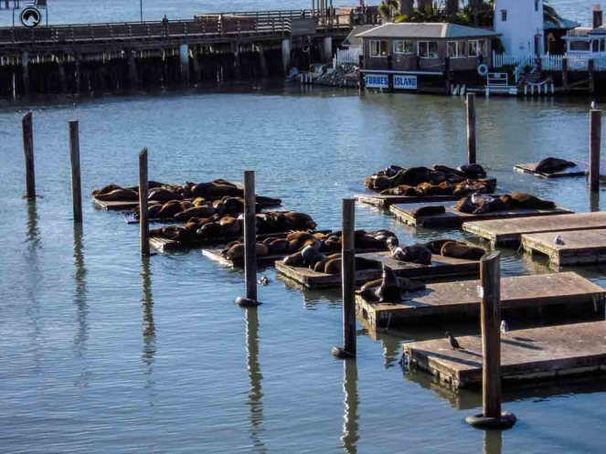 Fisherman's Wharf - São Francisco EUA