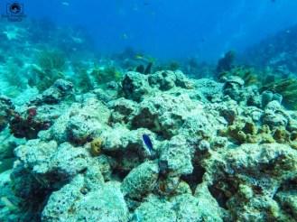 Mergulho em Key Largo nos Florida Keys 2
