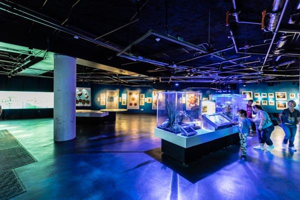 Exposição Marinha no Frost Museum em Miami Florida