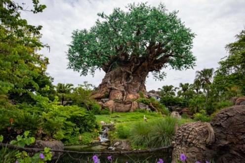 Árvore da Vida no Magic Kingdom nos Parques da Disney