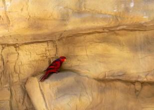 Aves do Avíario do Busch Gardens