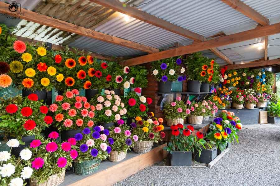 Imagem da loja de flores de madeira em Pucón