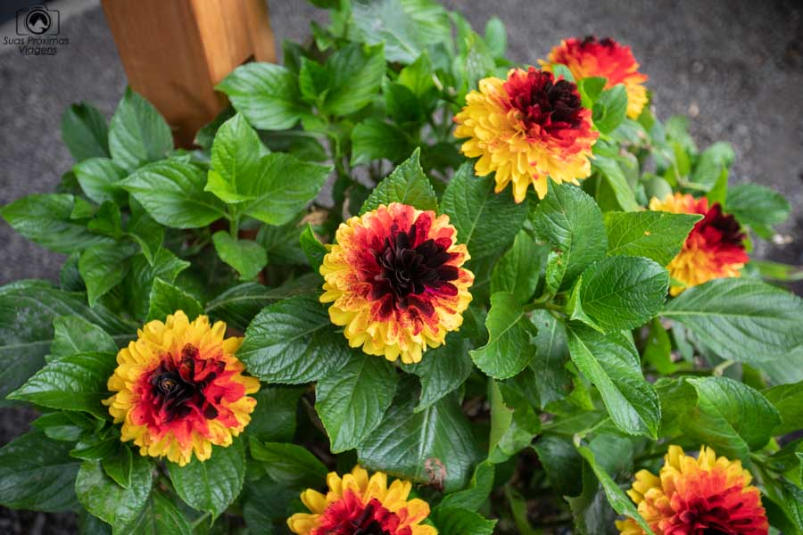 Imagem das flores de madeira