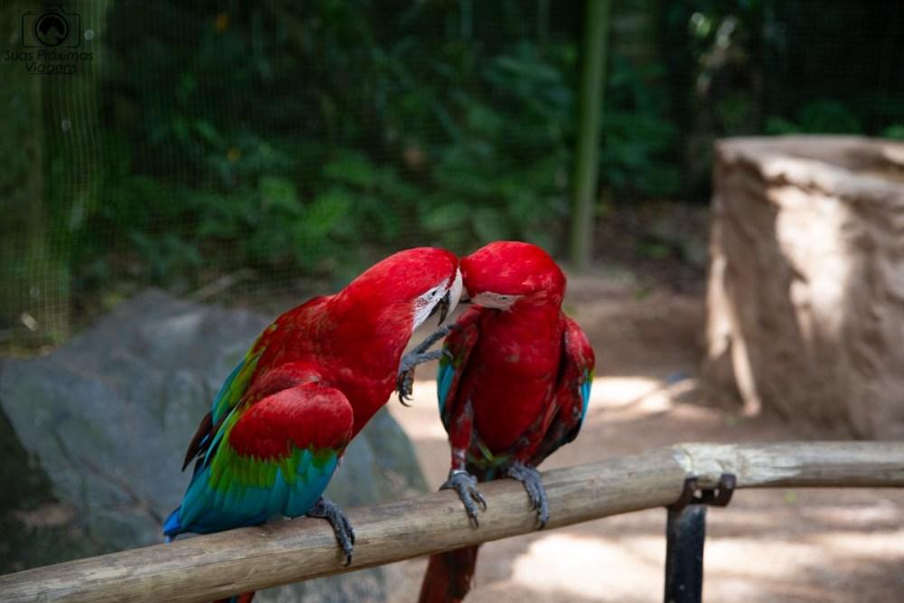 Imagem de duas araras no parque das aves em Foz do Iguaçu