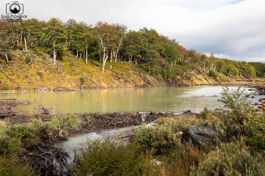 Imagem da Castoreira no trekking laguna esmeralda em Ushuaia