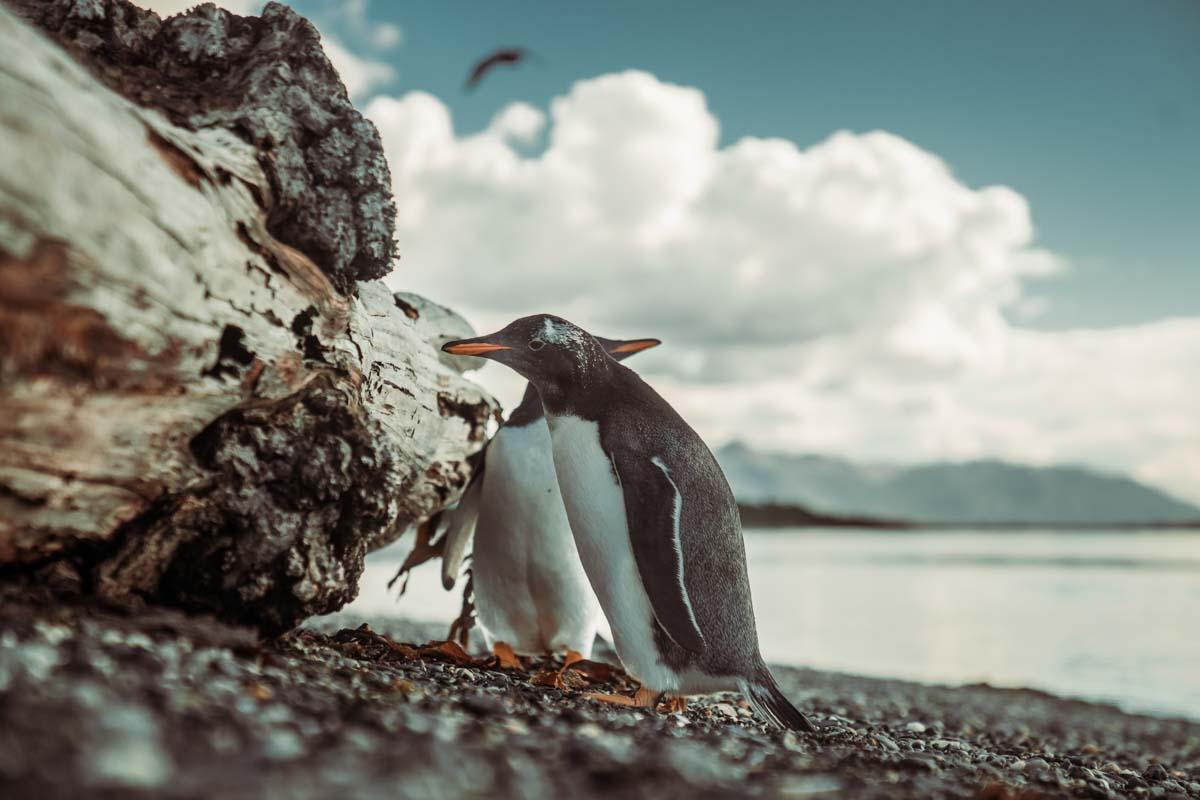 Navegação Canal Beagle e Pinguinera Terrestre – Ushuaia