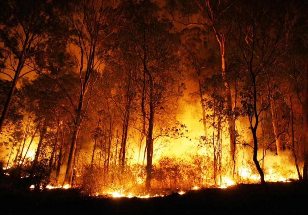 Incêndios florestais no Brasil aumentam 12,7%  em 2020