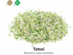 sprouts tatsoi