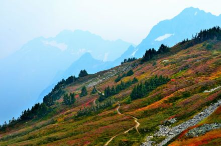 Colorful meadow over the Sahale Arm