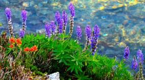 Wild flowers beside Crystal Lake
