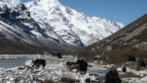 Mountains of Langtang