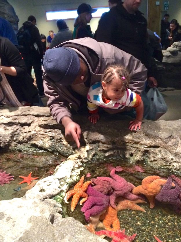 seattle_jasmine_aquarium