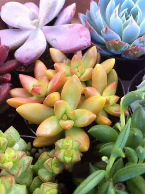 Where can I get some succulents?